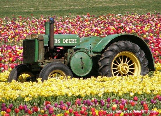 John Deere tractor in tulip field